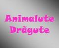 Animalute Dragute